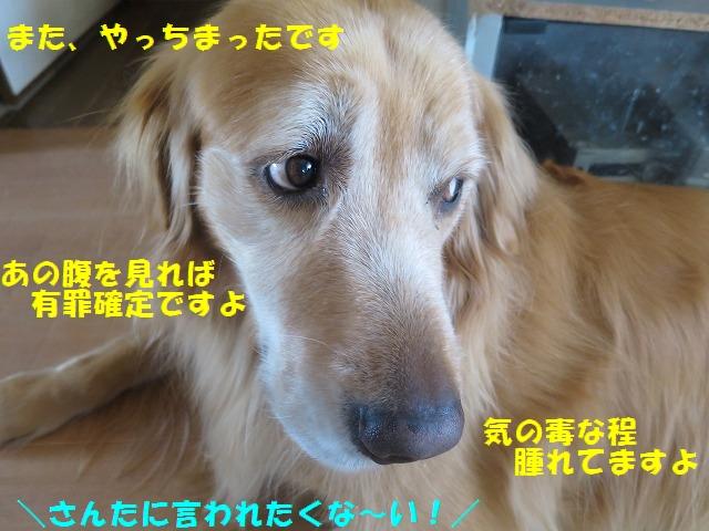 IMG_8282.jpg