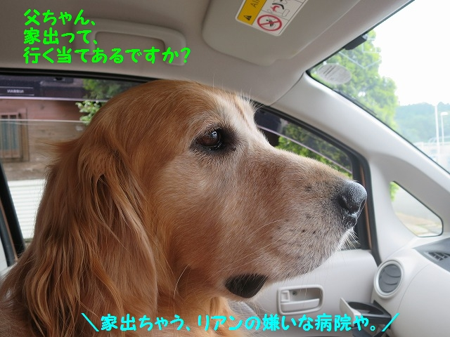 IMG_8367_20160528192537e77.jpg