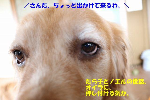 IMG_8380_20160711195922d3d.jpg