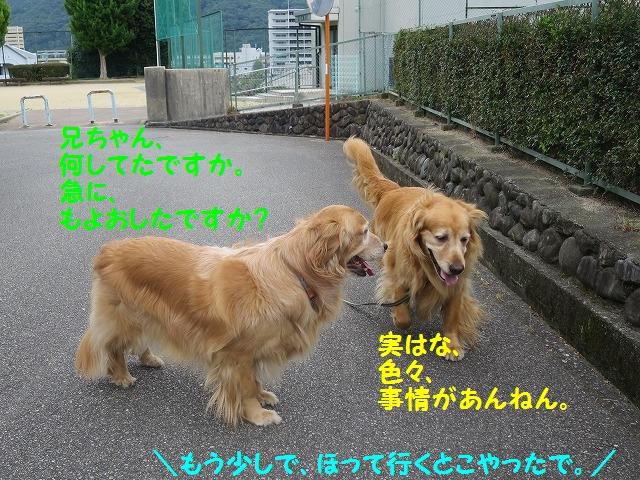IMG_8471_201606122108223d7.jpg