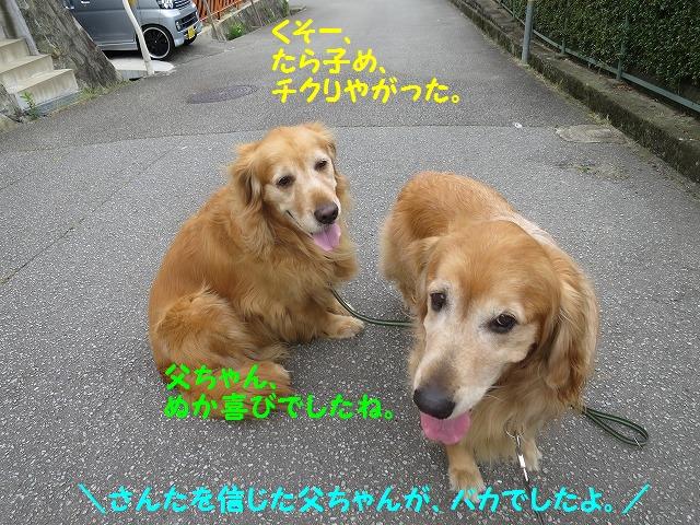IMG_8481_20160612210845dc5.jpg