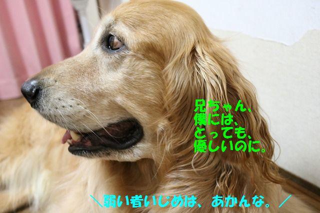 IMG_8547.jpg