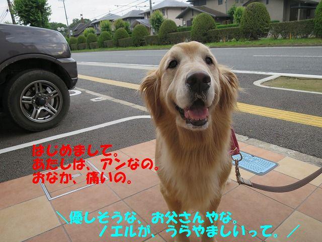 IMG_8557_20160621230205ba4.jpg