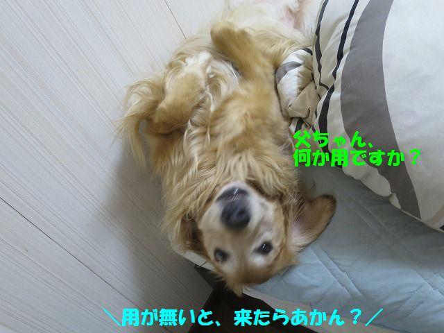 IMG_8616.jpg