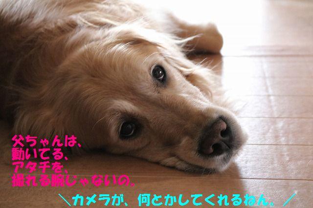 IMG_8686.jpg