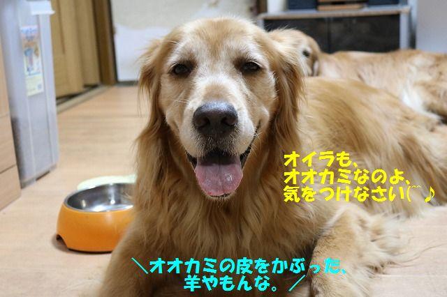 IMG_8967.jpg