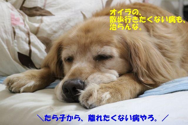 IMG_9071.jpg