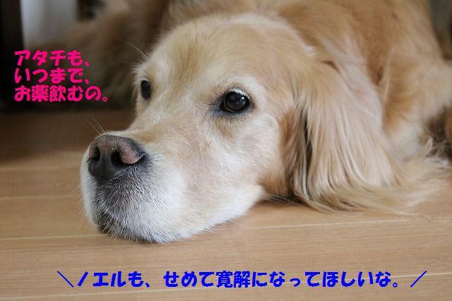 IMG_9081.jpg