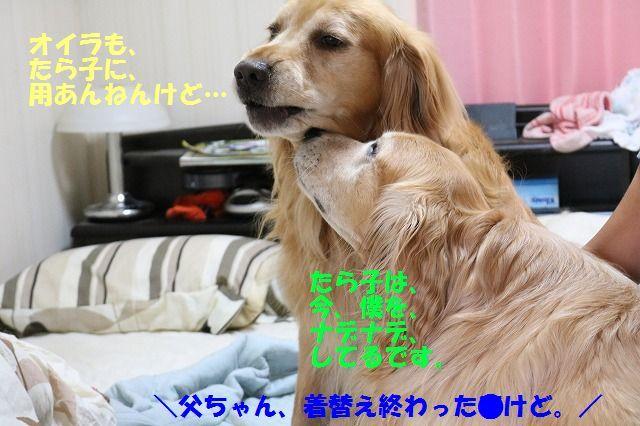 IMG_9203aa.jpg