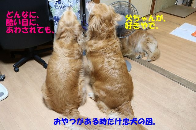 IMG_9328.jpg
