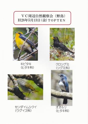野鳥トップ10 VC20160513