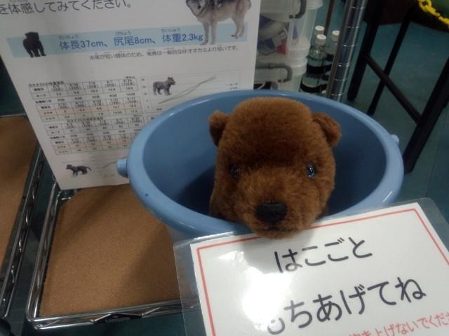 2016_狼祭in博物ふぇすてぃばる!_04