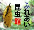 2016_ふれあい昆虫館_logo