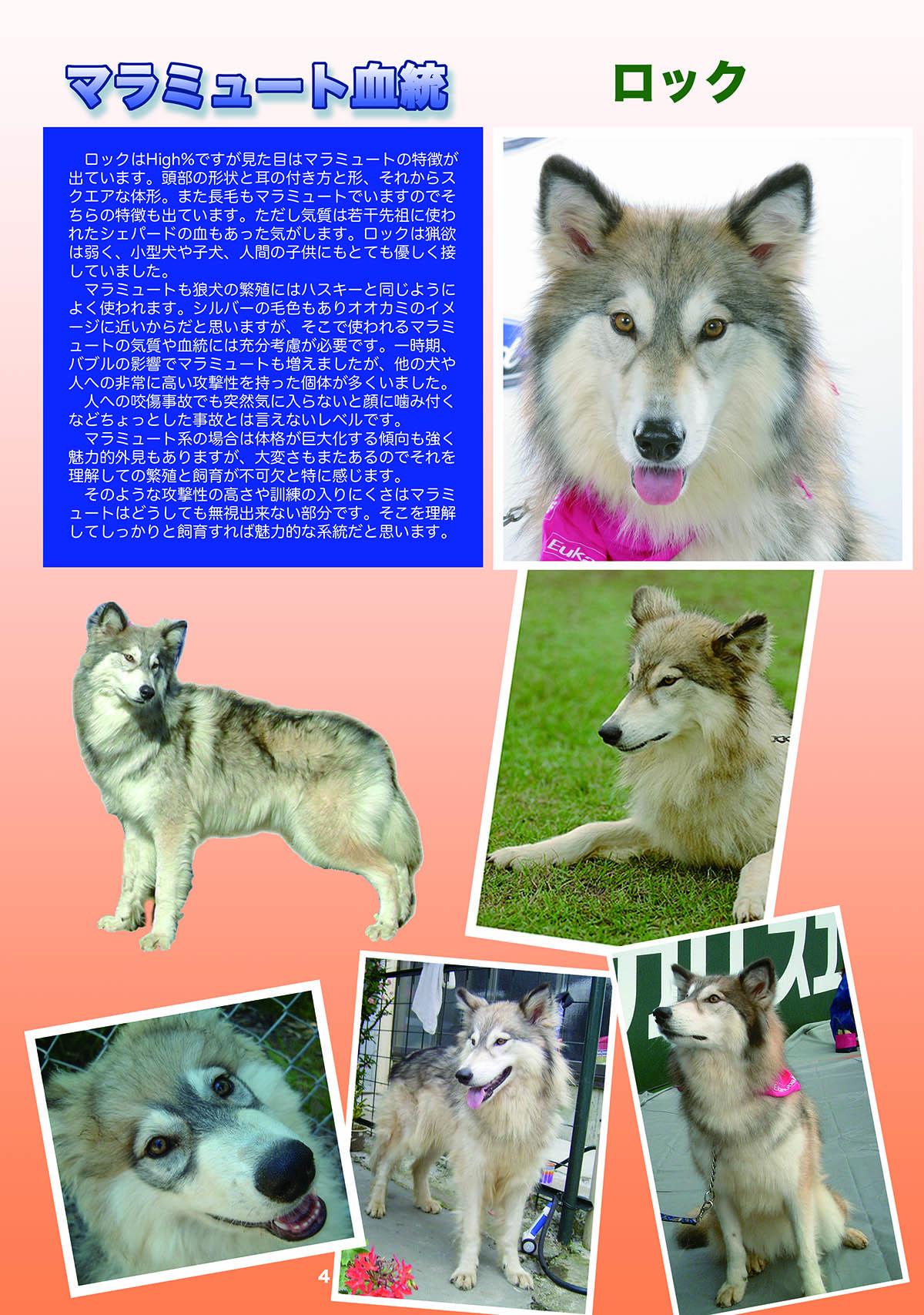 2016_SERIORS STORY 日本狼犬クラブ_05