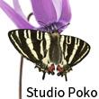 2016_Studio Poko_logo