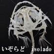 2016_いぞらど isolado_logo
