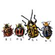 2016_横山拓彦_logo