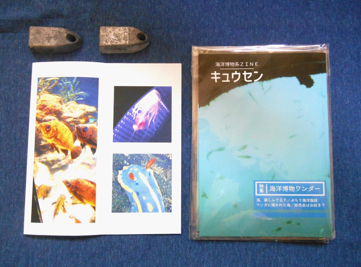 2016_海洋博物系ZINE キュウセン_02