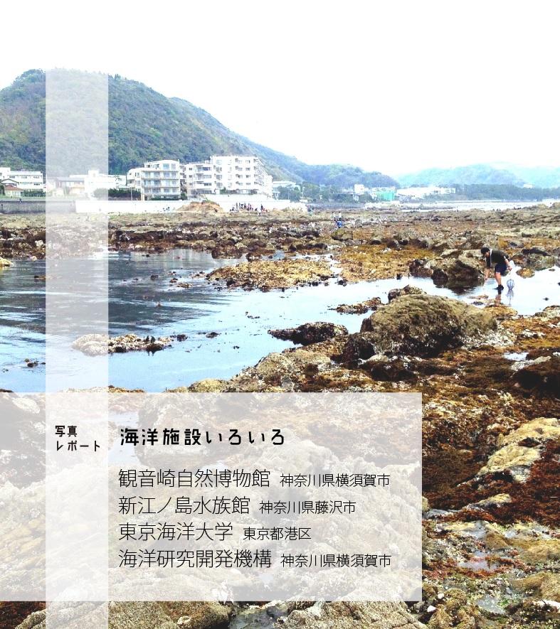 2016_海洋博物系ZINE キュウセン_04