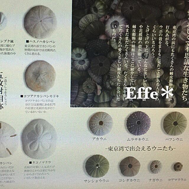 2016ガクタメ_Effe_02