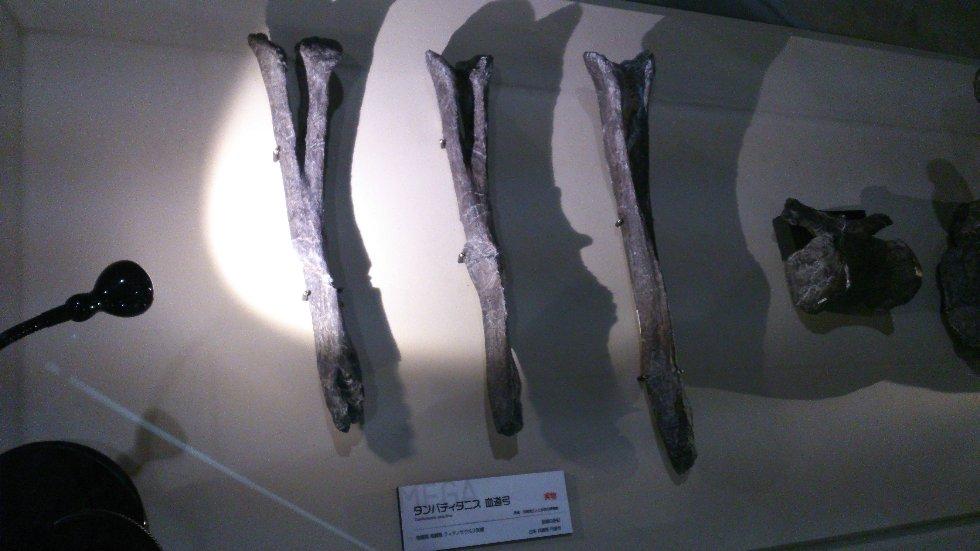 2016ガクタメ_恐竜倶楽部_03