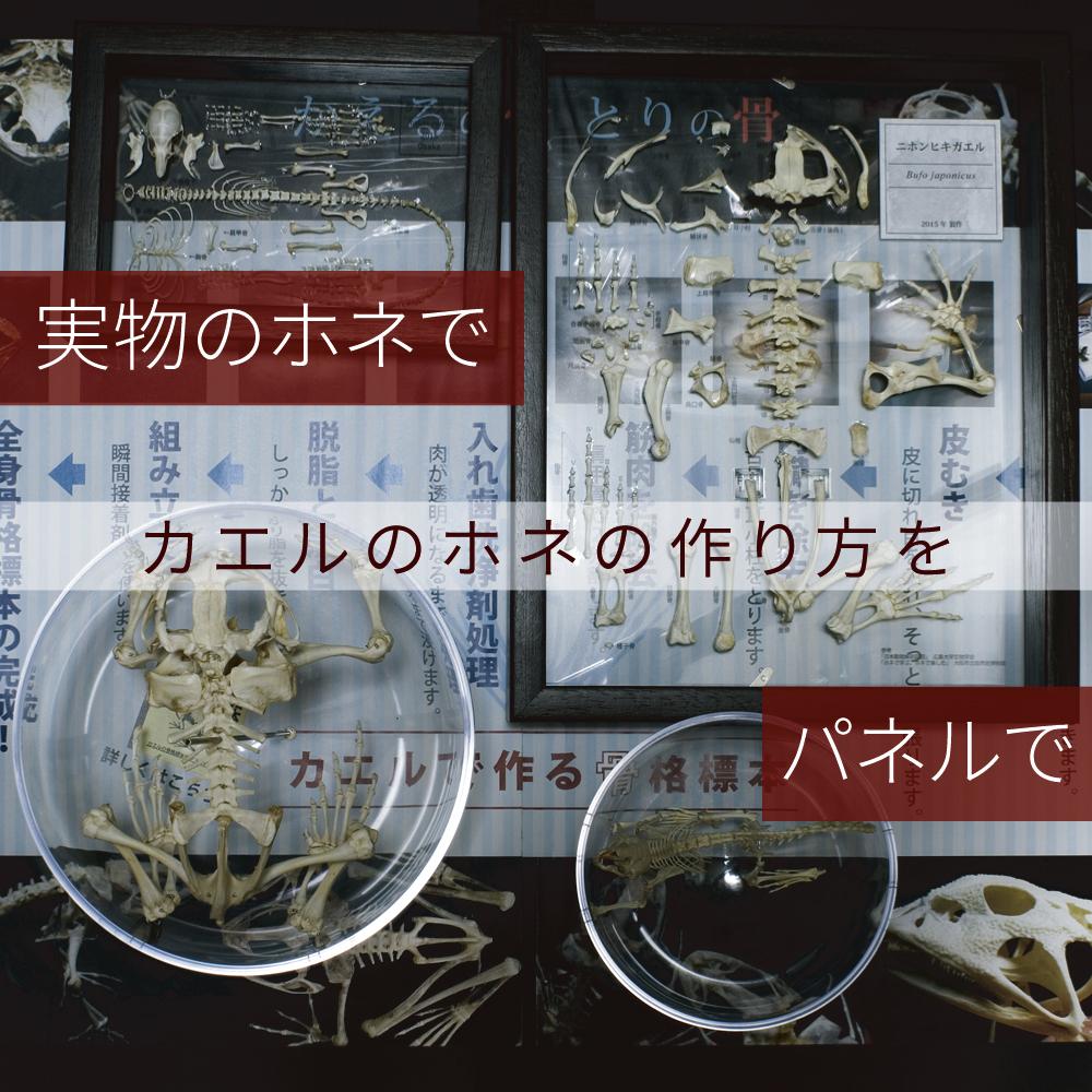 2016ガクタメ_かえるの骨 とりの骨_02