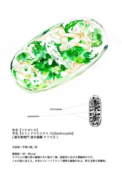 2016ガクタメ_淡水微生物図館_03