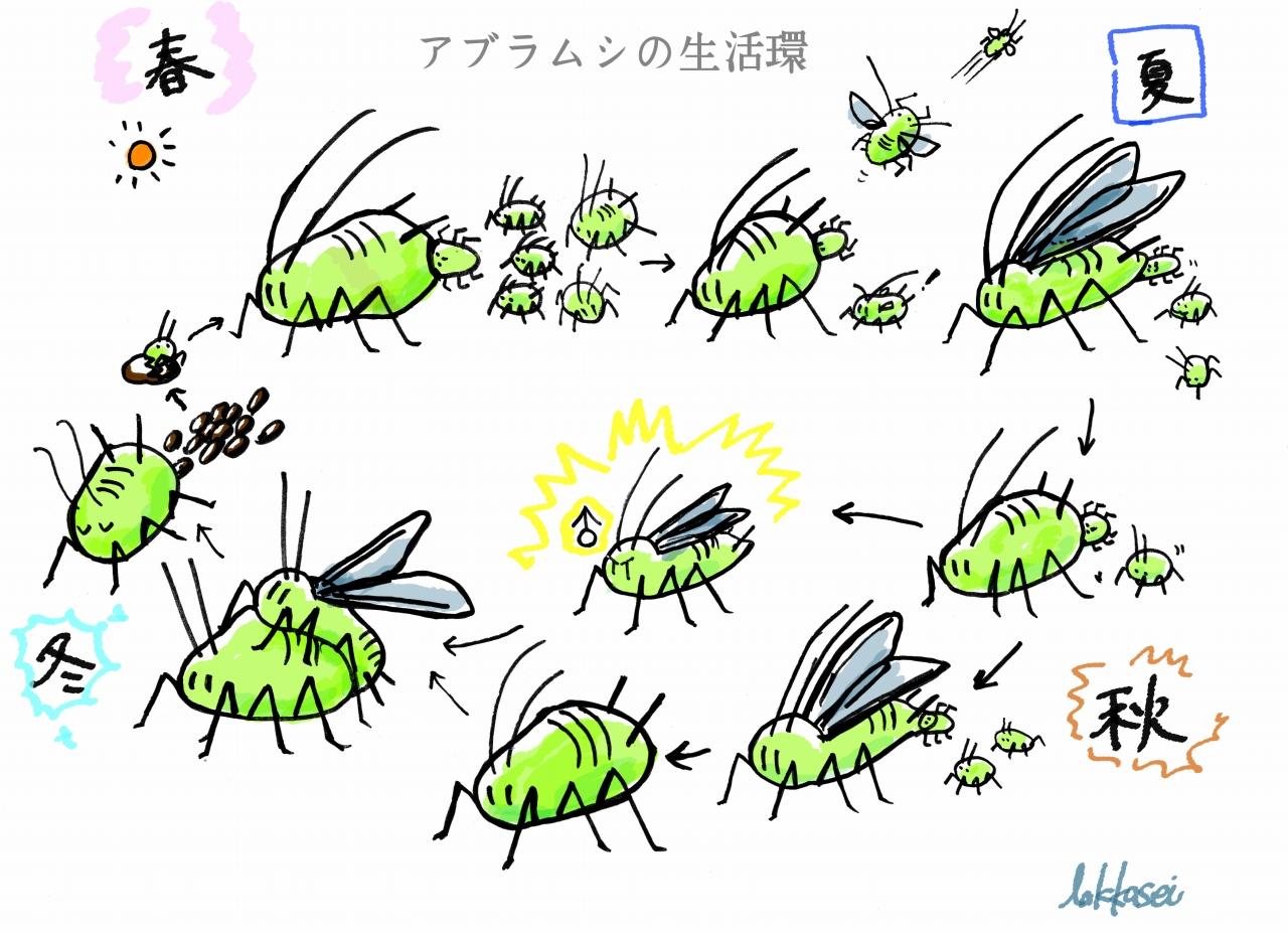 2016ガクタメ_lakkasei_01