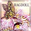 2016_RAGDOLL_logo.jpg