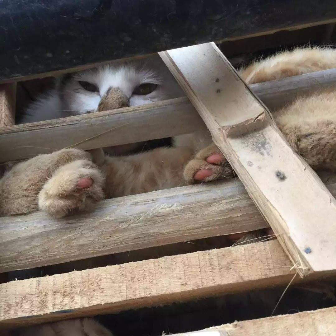 catsping2.jpg