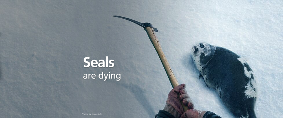 seal-hunt-started.jpg