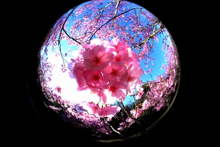桜色に溢れて