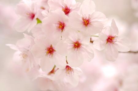 春のブーケ