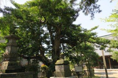 金蓮院・ラカンマキ