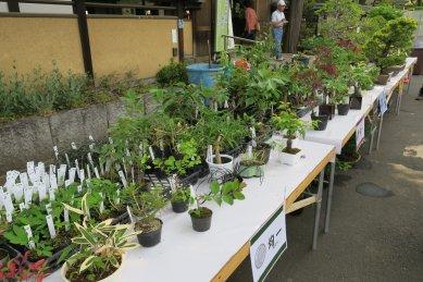 盆栽四季の家前の清香園の棚(ワンコインのものまで売られている)