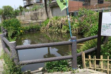 (葛飾神社の池)