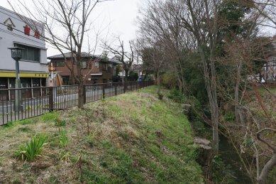 小金井橋付近の桜