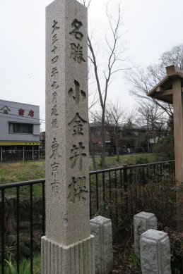 名勝小金井櫻の碑