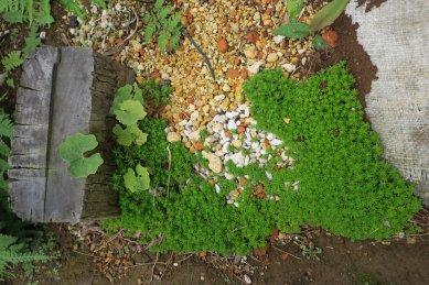用土捨て場のグランドカバー用植物