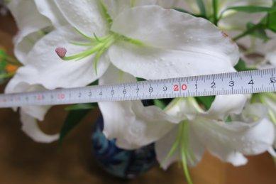 径は23cm位