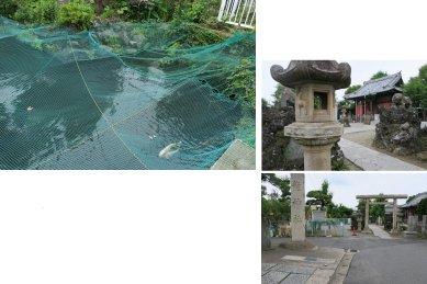 龍神社の池