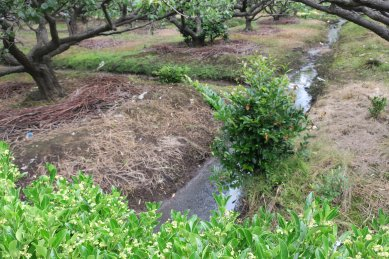 梅園脇の湧水池