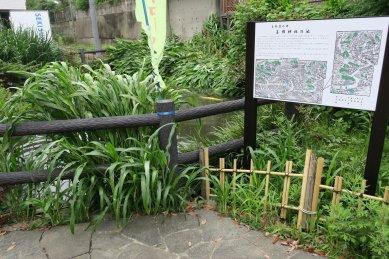 葛飾神社の池