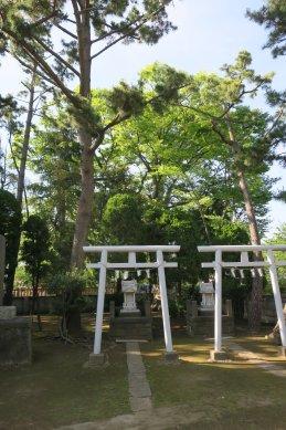 樹齢500年ケヤキ