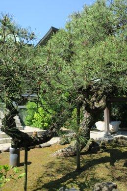 浄興寺・松