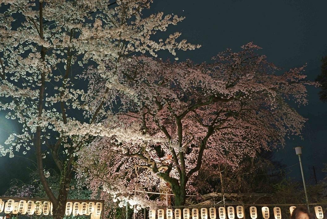 平野神社5