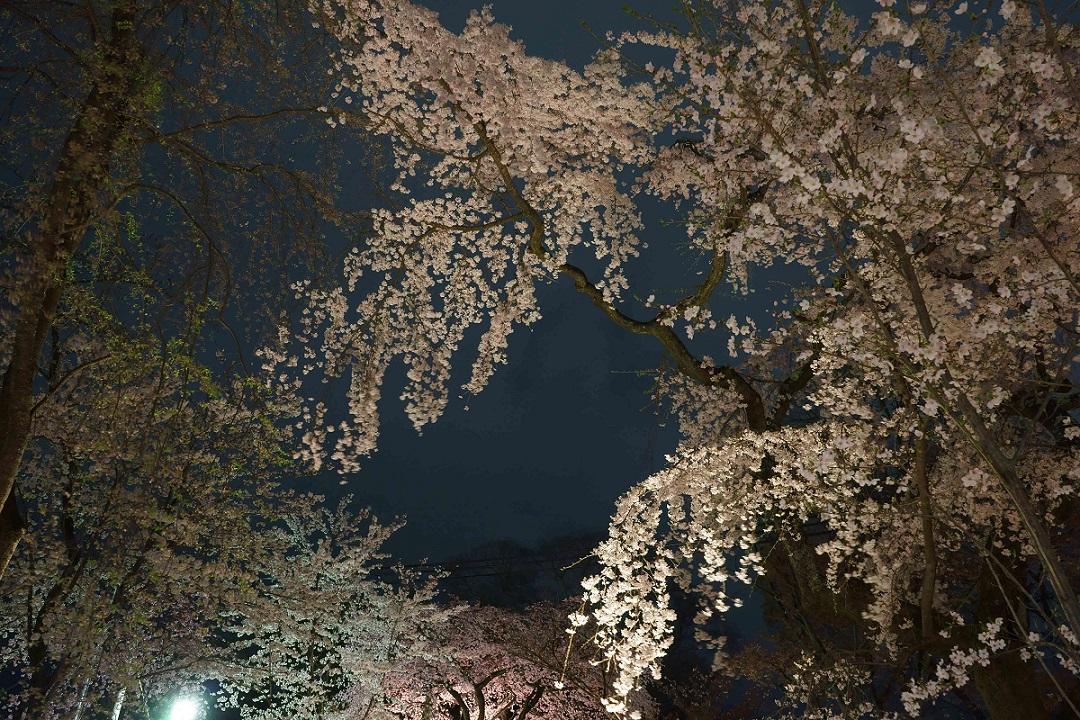 平野神社7