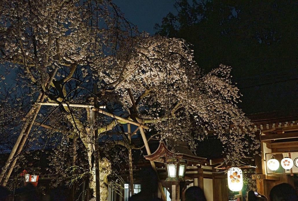 平野神社6