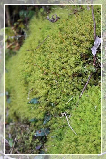 美しい苔の世界