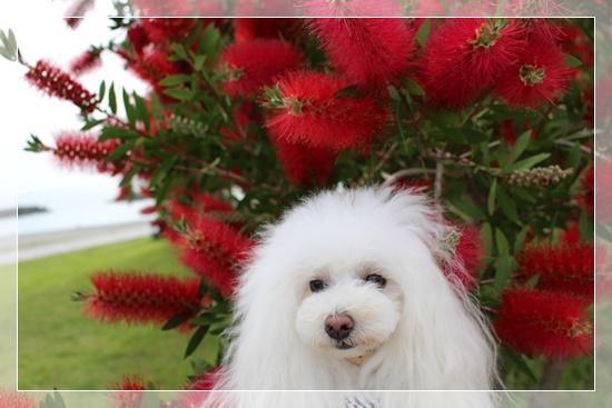 六花とブラシフラワー